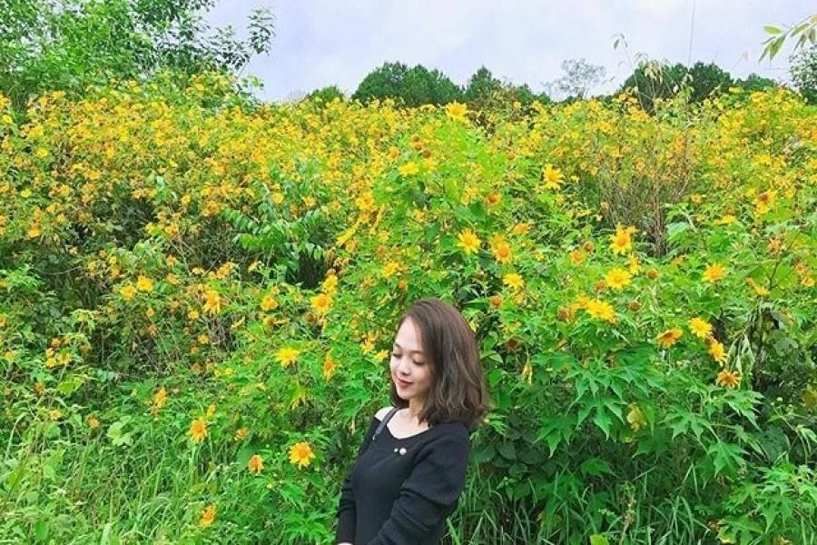 Những địa điểm chụp hình hoa dã quỳ ở Đà Lạt